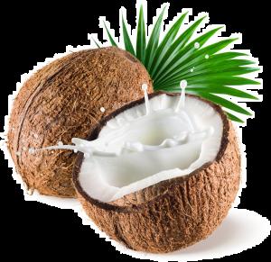 pngfind.com-coconut-png-533216